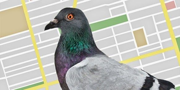 How Google Local Search Algorithm, Pigeon 2014 Works