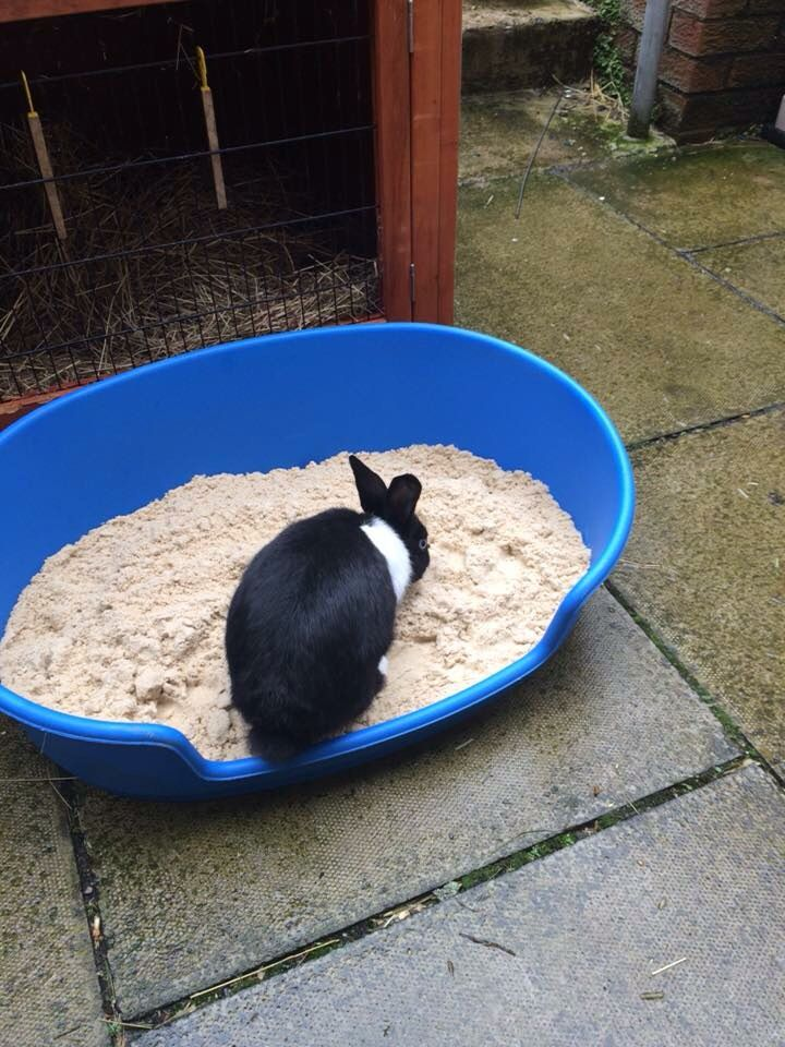 Plastic Dog Beds Can Be Filled With Kid Safe Play And To Create A Great Digging Pit Bunny Care Plastic Dog Beds Pet Bunny