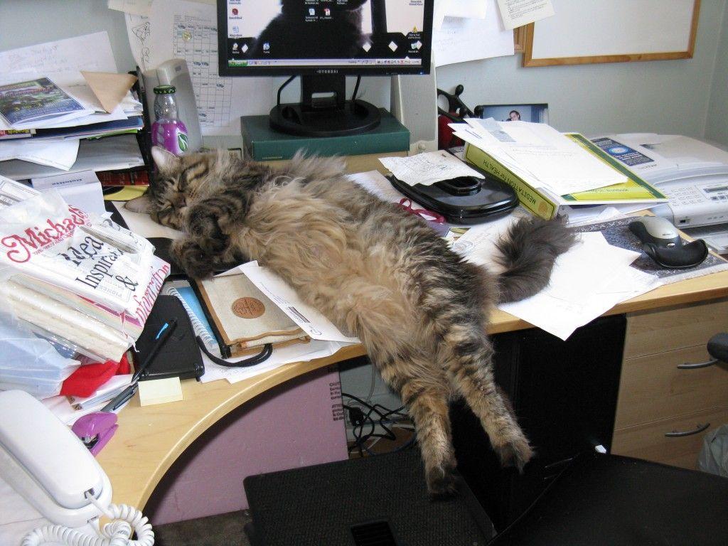 Výsledek obrázku pro cat on the desk with computer