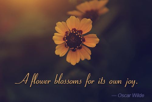 oscar wilde quote about flowers jpg flower quotes flower quotes