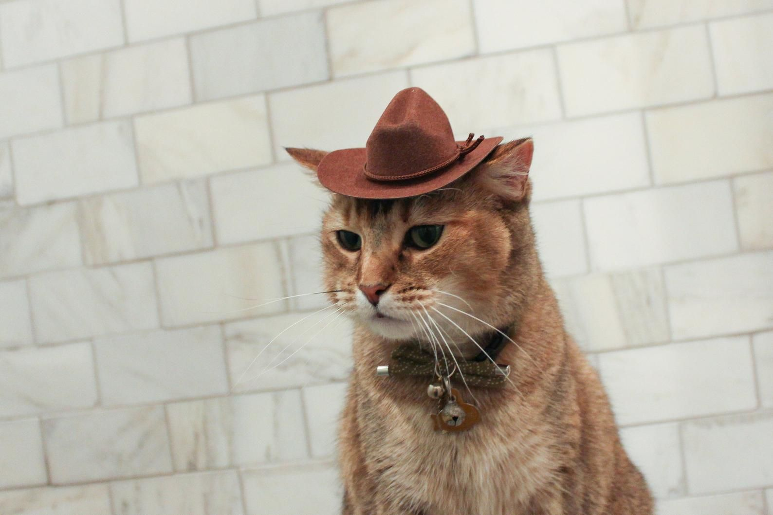Brown Cowboy Cat Hat Free Shipping In 2021 Cat Hat Cat Accessories Cat Aesthetic