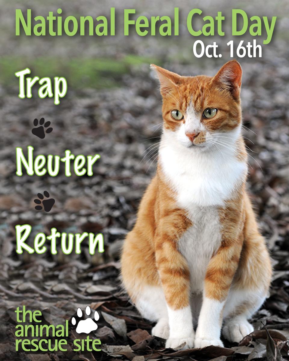 National Feral Cat Day TheAnimalRescueSite