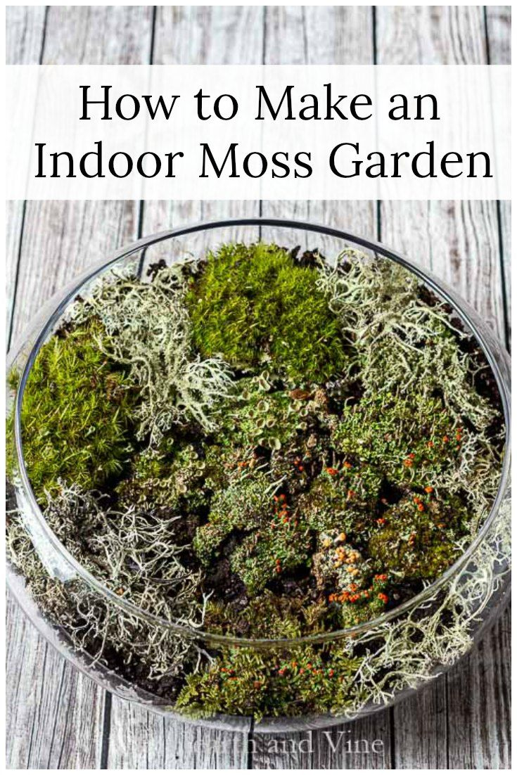 This easy tutorial will show you how to make a beautiful indoor moss garden or terrarium and bring the luster of natural living moss into your home decor.