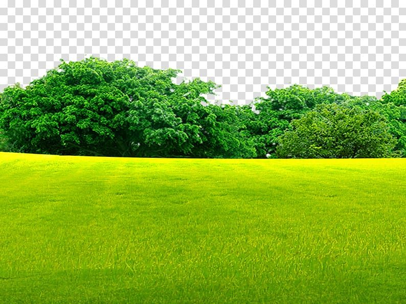 Green Grass Field Near Green Trees Lawn Grassland Woods On The Grass Transparent Background Png Clipart Grass Background Grass Field Light Background Images