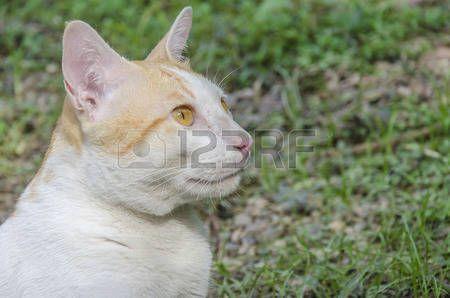 Cat Buscando algo