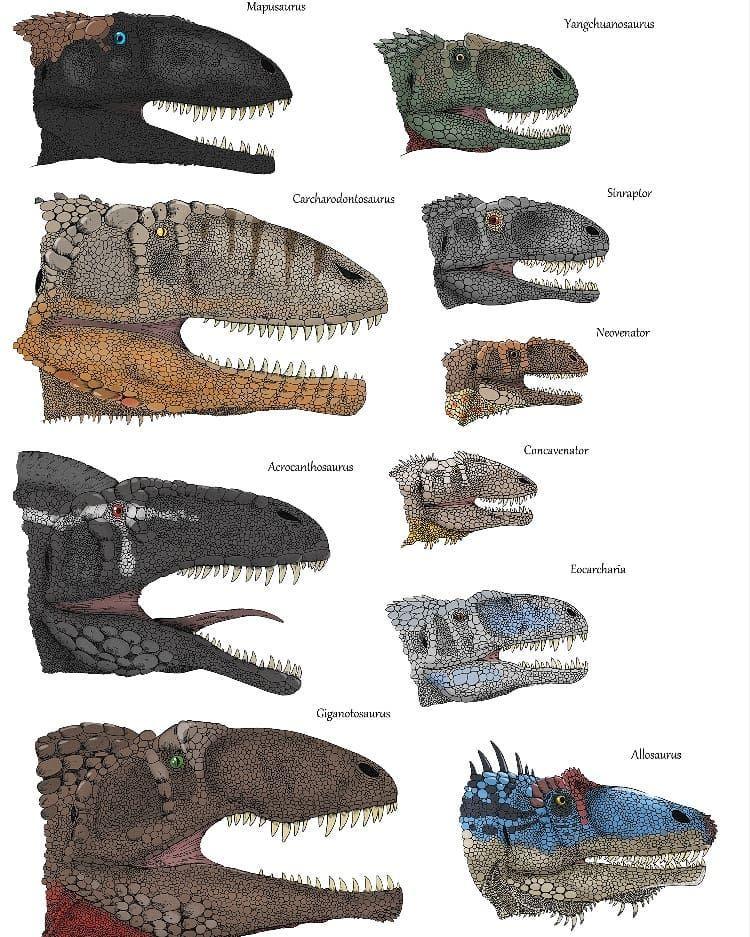 """Gregory on Instagram: """"Allosaurids"""" #prehistoricanimals"""