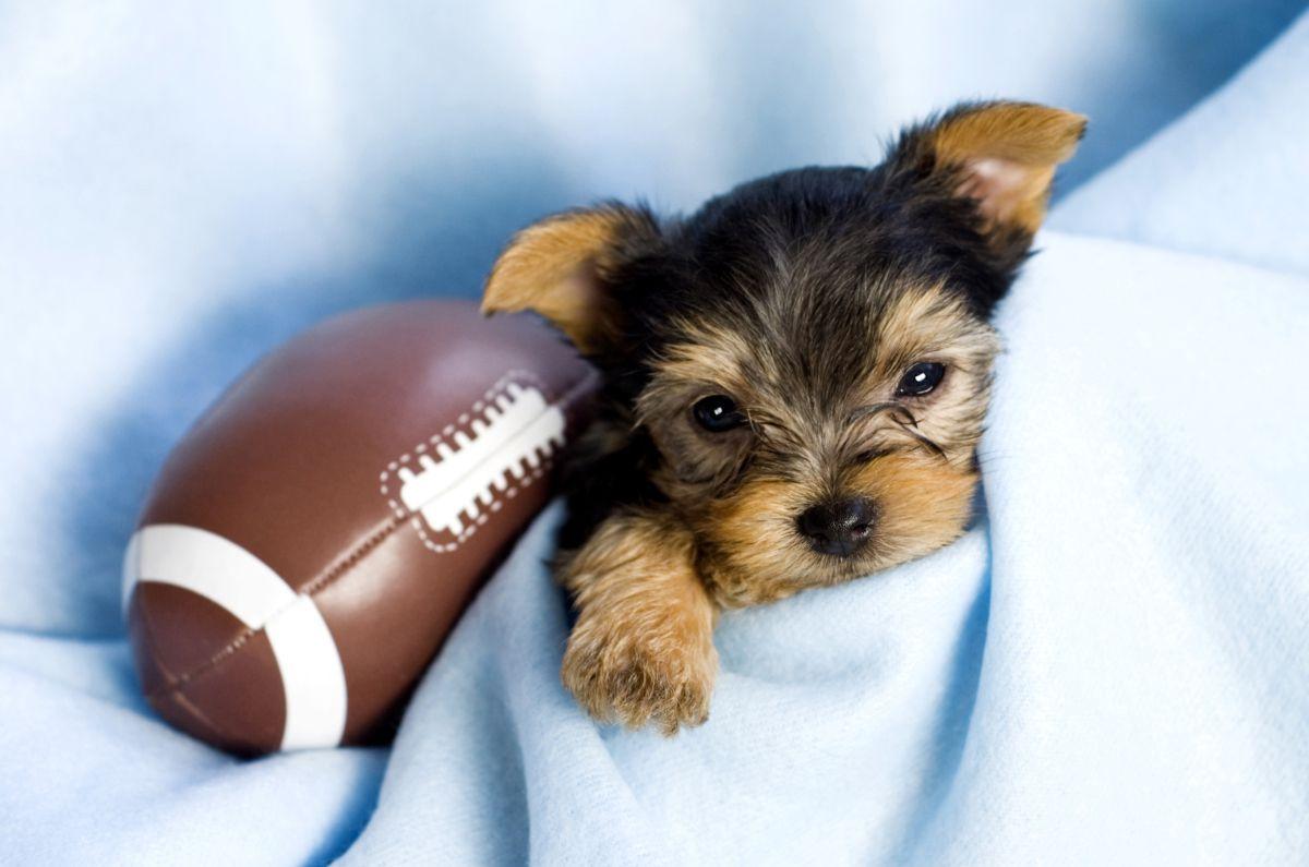 The football star.