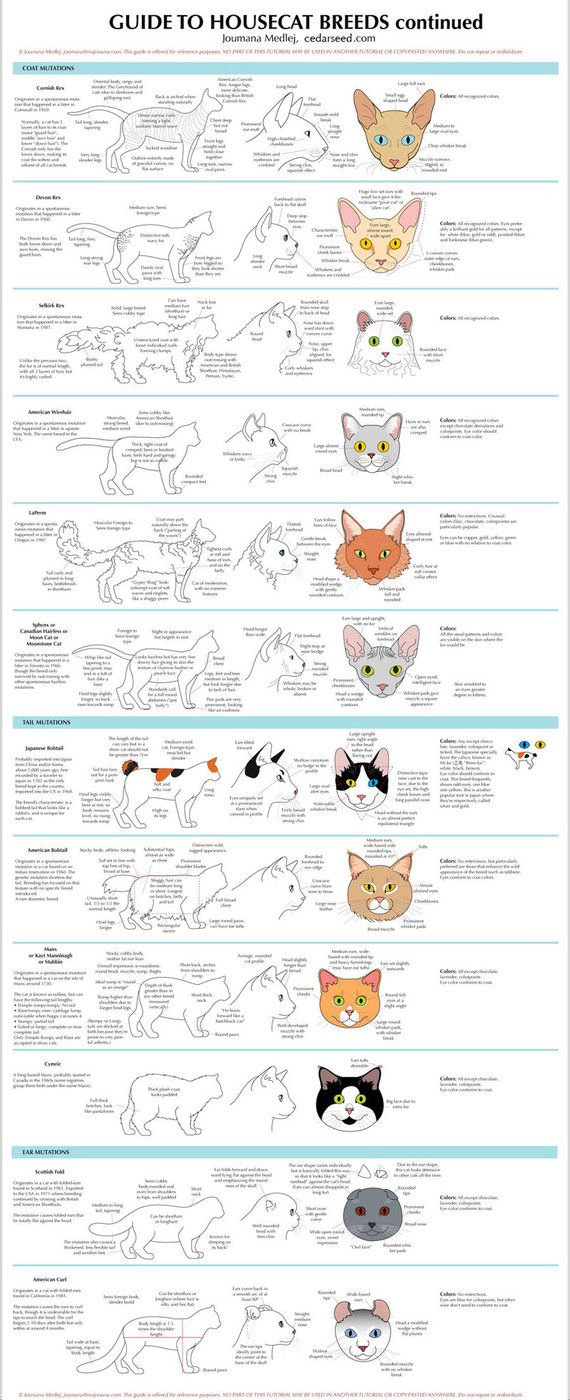 Guide To Housecat Breeds 2 Animal Drawings Cat Drawing Cat Breeds