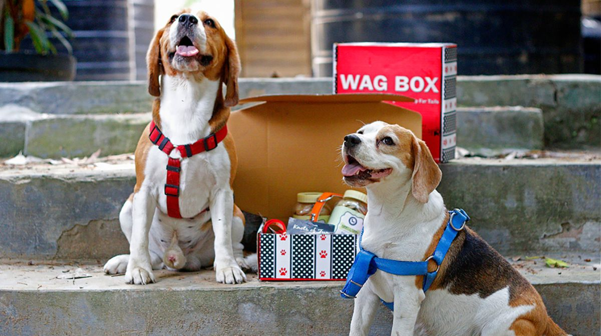 The Best Gift For Your Dog A Wag Box Your Dog Online Pet Store