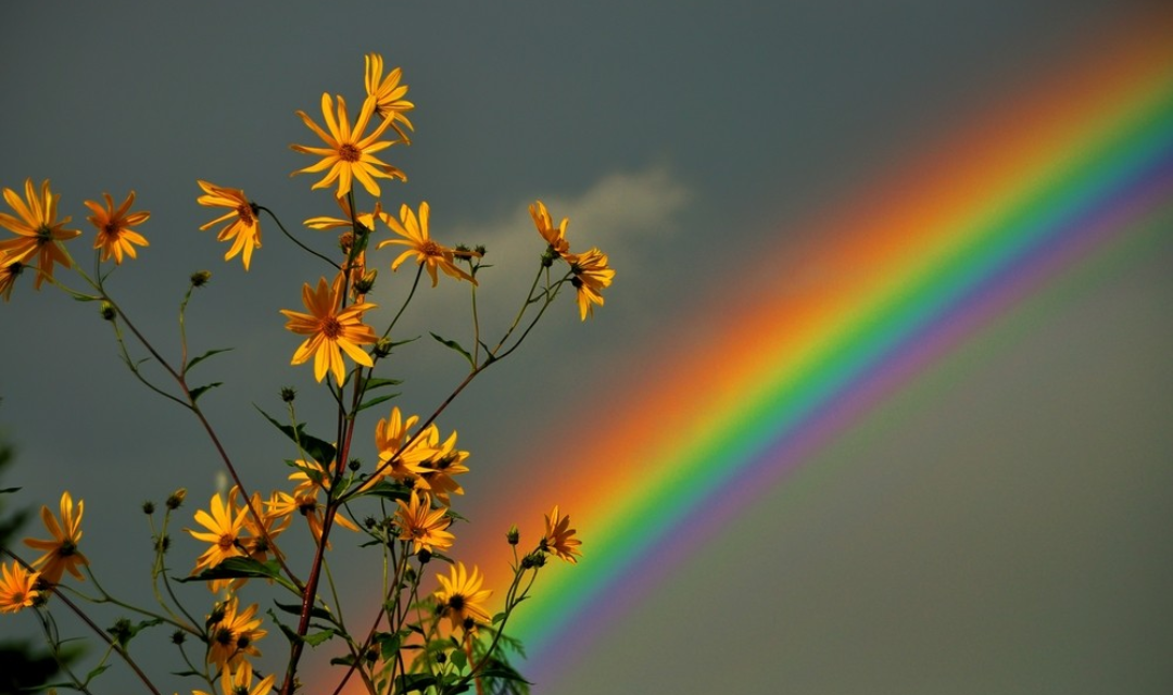 Flowers Rainbow Nature In 2020 With Images Aesthetic
