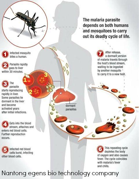 pin by marte lina on health u003e salud malaria symptoms malaria rh pinterest com
