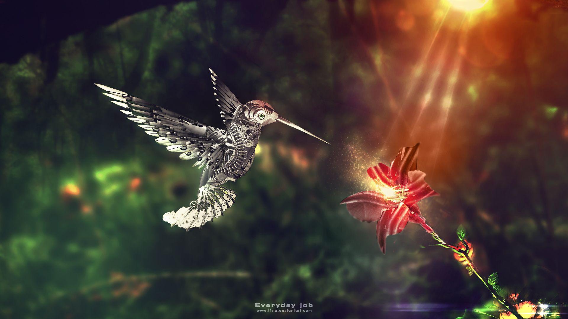 Beautiful Colibri Bird Hd Wallpapers Wallpapers Wallpaper Hd