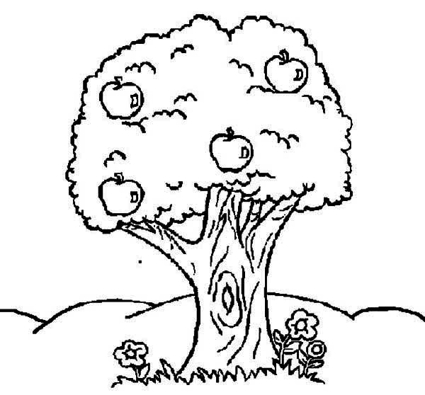Apple Tree Apple Tree And Flower Coloring Page Apple Tree And