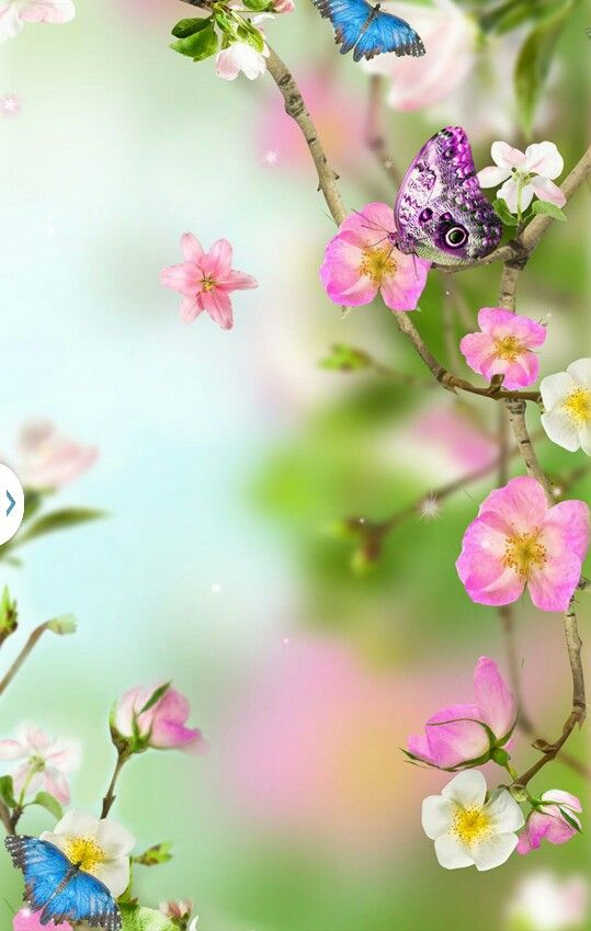 Flower butterfly   Spring wallpaper, Flower wallpaper