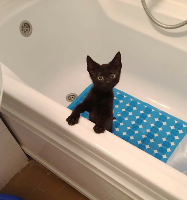 Then the bath is today or not?