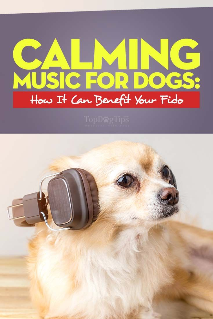 Calming music for dogs what is it and how can it benefit