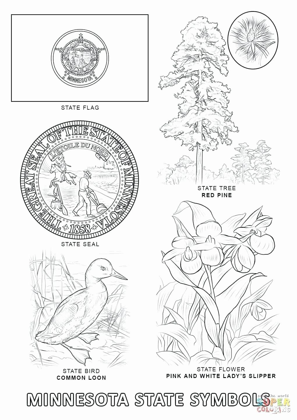 Texas State Bird Coloring Page Luxury Minnesota State Bird