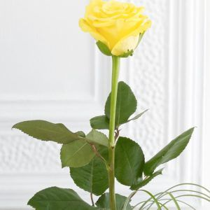 Single yellow rose wallpaper with long stem 1000 long stem single single yellow rose wallpaper with long stem mightylinksfo