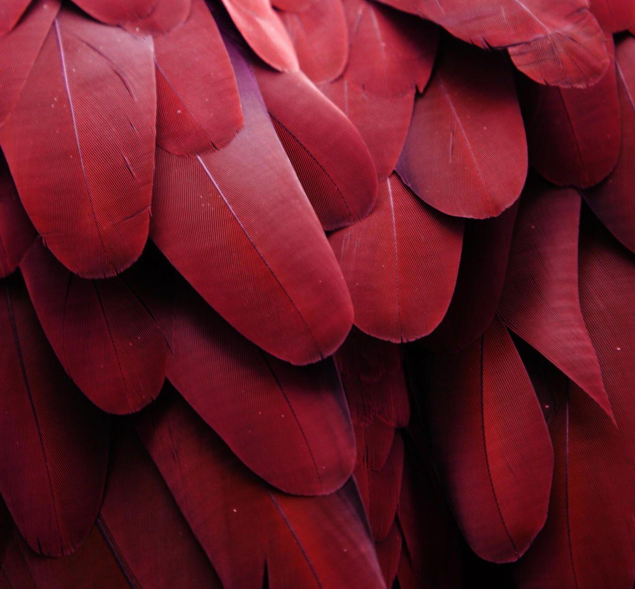 Lost In Pattern Color Del Ano Rosas Textura Visual Y Tactil