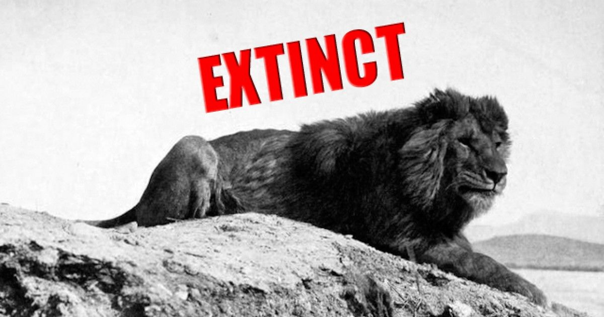 Here's Every Single Animal That Became Extinct In The Last