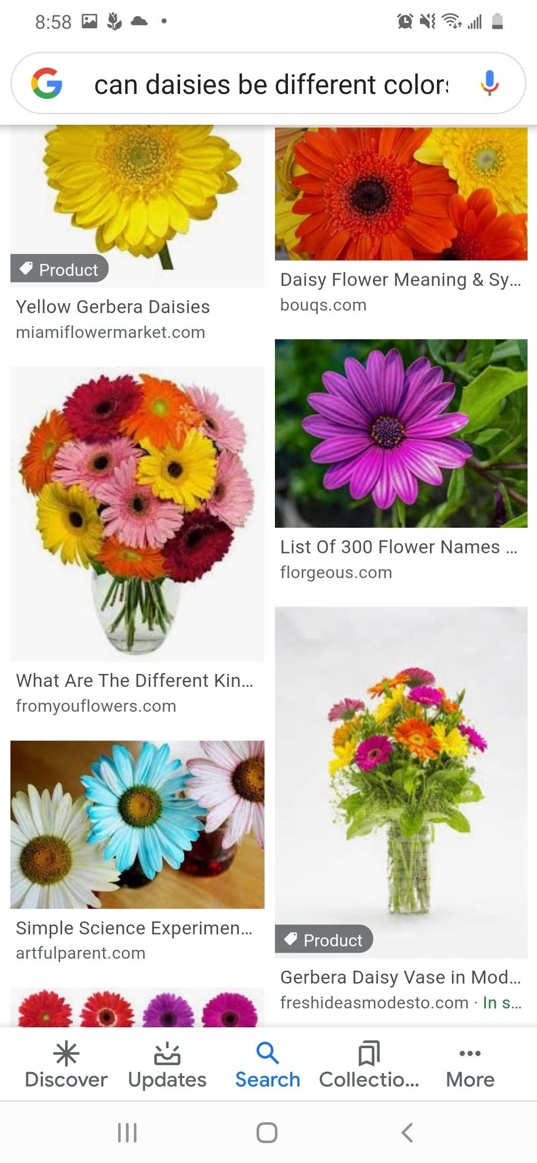 Pin By Mandie Ross On Tattoo Ideas In 2020 Daisy Flower Meaning Flower Names Flower Meanings