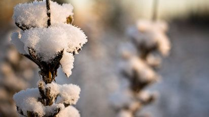 Imagens da geada e neve no Rio Grande do Sul.