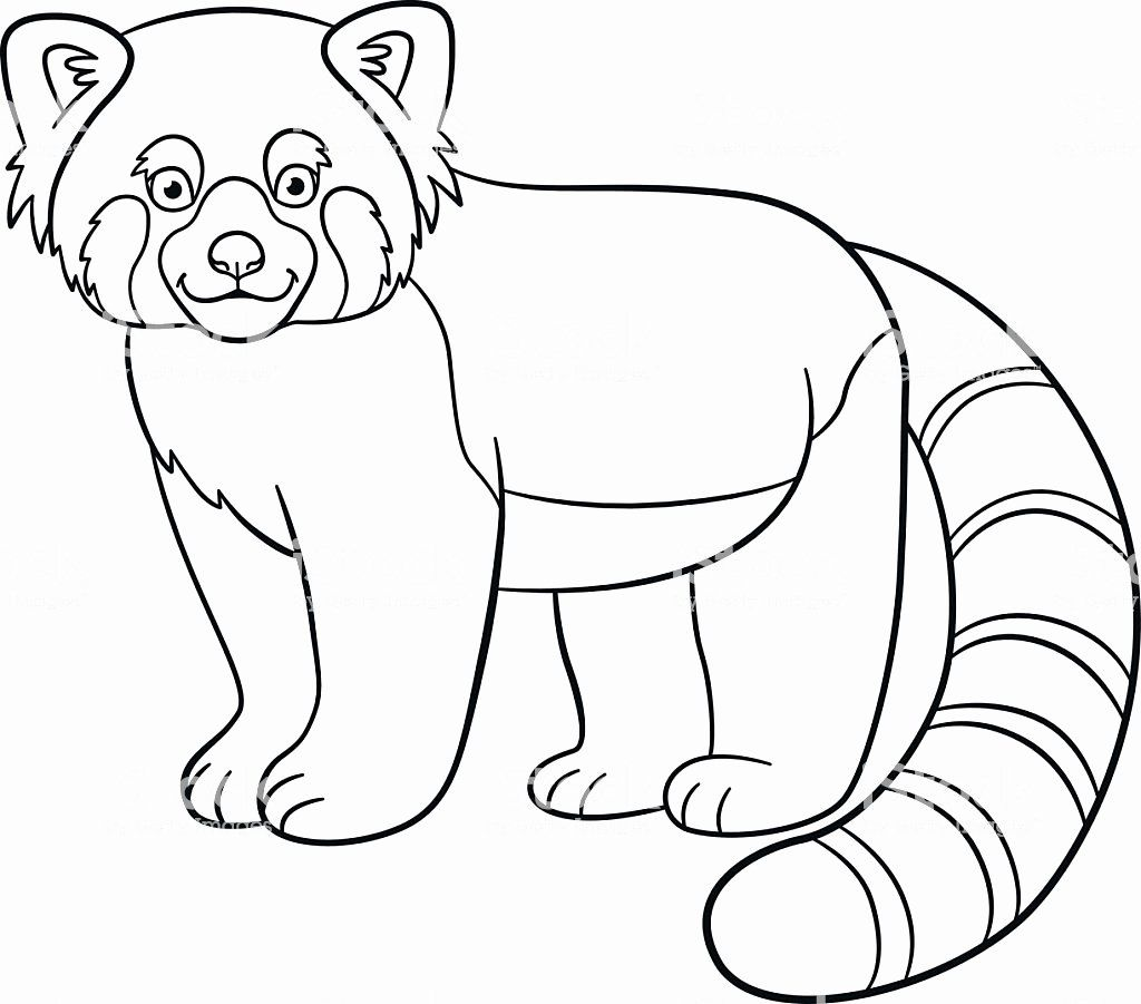 Red Panda Coloring Page Inspirational Coloring Pages Little Cute