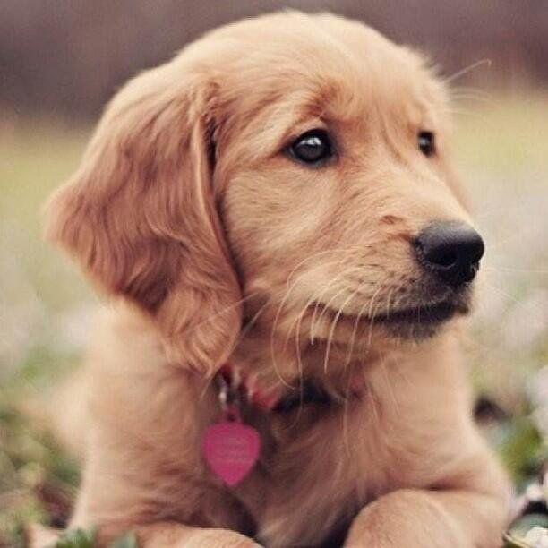 Dailydose Of Puppies On Susseste Haustiere Niedliche Hunde Ausgestopftes Tier