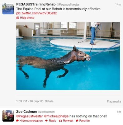 Horses are excellent swimmers! Swimming is a wonderful way for horses to rehab after an injury.