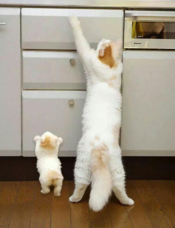 Too cute - mommy cat n her lil mini-me