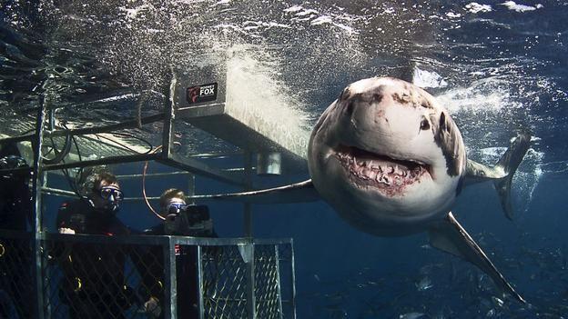 BBC - Capital - A big idea — from a shark attack