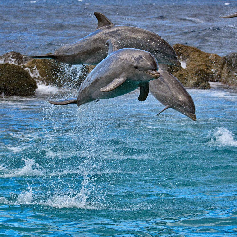 Картинки на шкафчики к группе дельфиненок звания