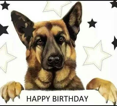 Image result for happy birthday german shepherd