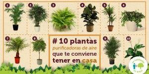 10 Plantas Purificadoras de Aire que te Conviene Tener en Casa