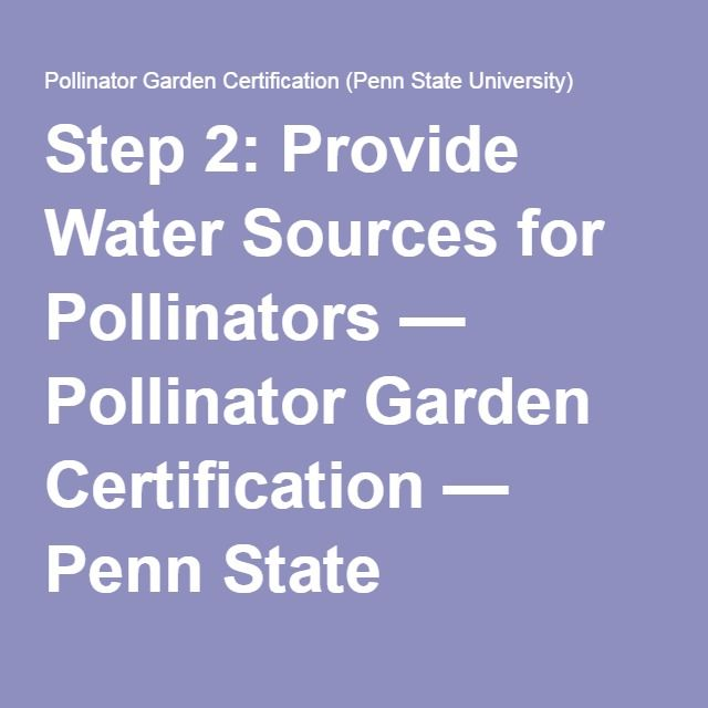 Step 2: Provide Water Sources For Pollinators