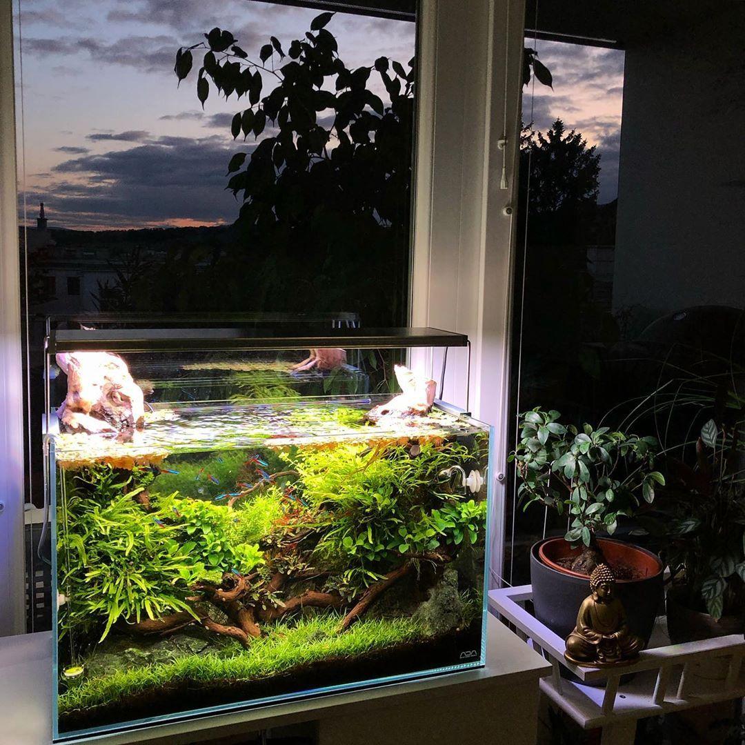 Pin By Plant Ideas On Aquascape Planted Aquarium Aquascape Aquarium
