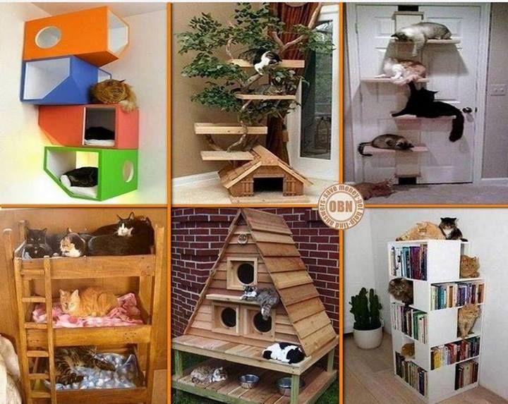 Gatti Mobili ~ Idee cucce gatti only fun gatti animali e idee