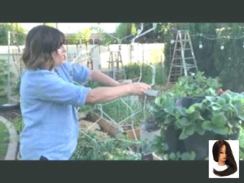 #Anbau #Arizona #den #für #Tipps #Tomaten #tomatenzüchten