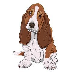Basset Hound Puppy Realistic Vector Illustration Isolated Dog Face Drawing Dog Drawing Dog Illustration