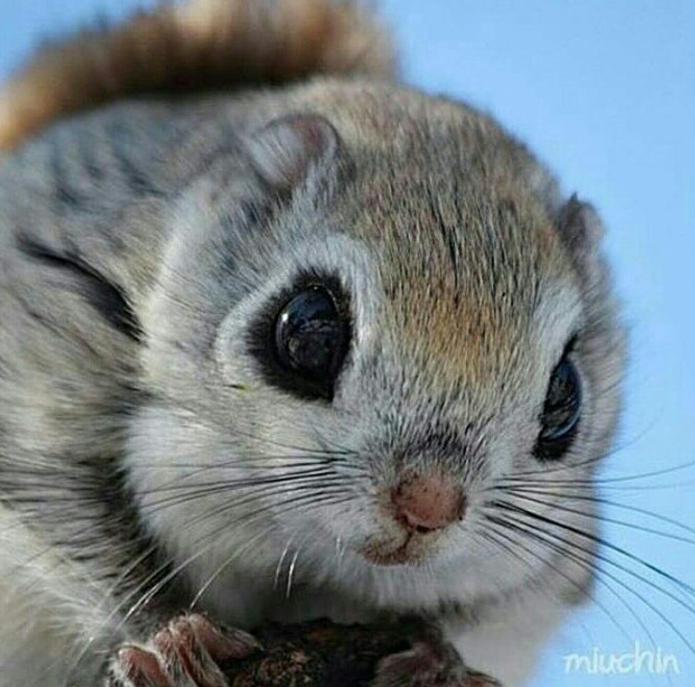 Cute Pets Flying Squirrels