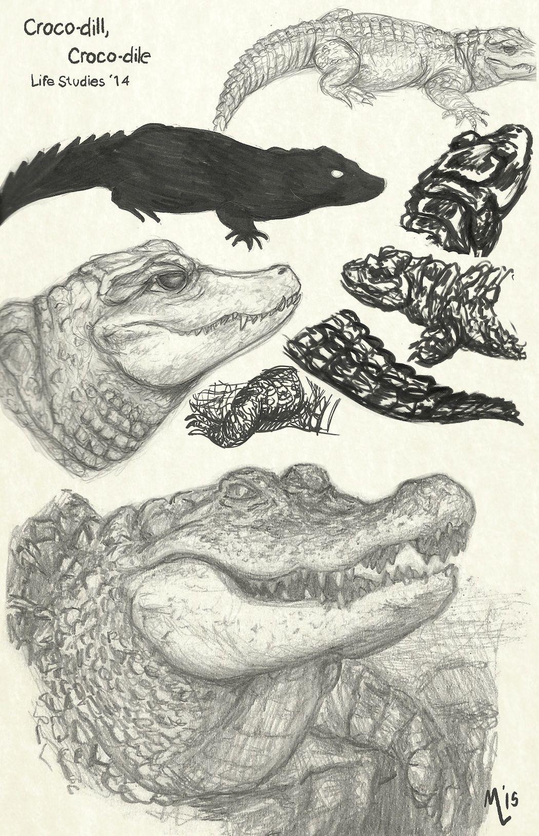 Realistic Alligator Drawing : realistic, alligator, drawing, Alligator/Crocodile, Sketches, Crocodile, Illustration,, Animal, Drawings,, Snake, Drawing