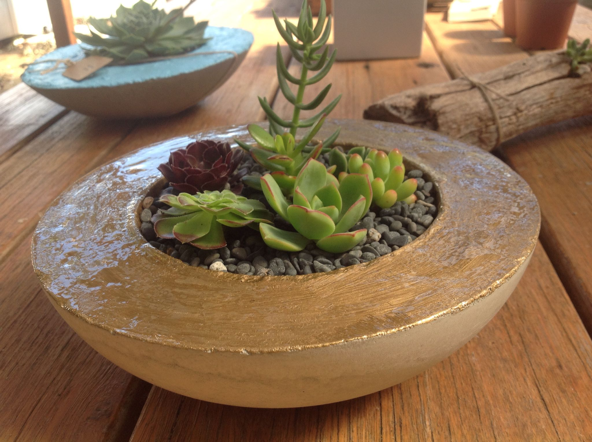 Succulent Love, Handmade Planter By Succulents & Twine