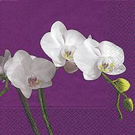 Servietten 33x33 cm +BUTTERFLY ORCHID+ weiße Orchideen auf lila Serviette