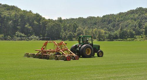 New England Sod Rhizomatous Tall Fescue Rtf Sod Savage Farms Grass Plugs Sod Grass Tall Fescue