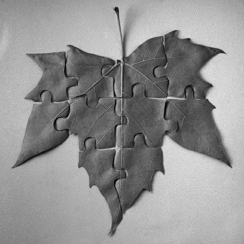 Puzzle piece magnolia leaves lain over one another