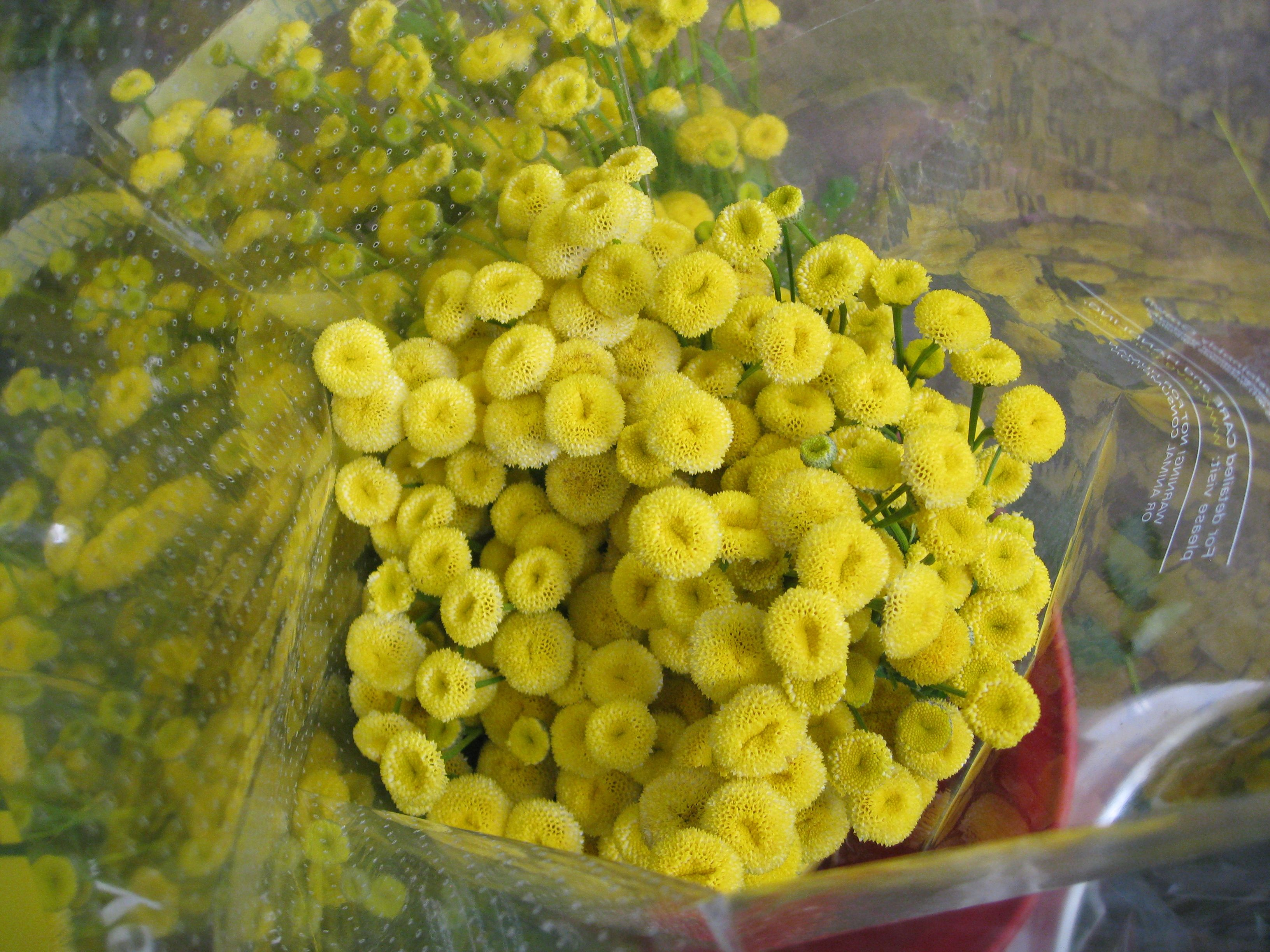 Love These Tiny Yellow Flowers They I Saw At The Flower Mart In