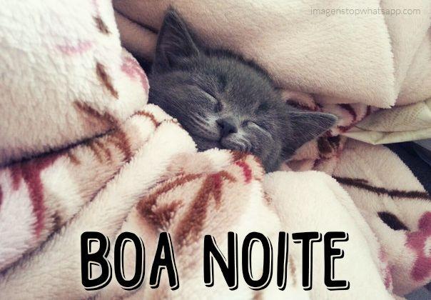 Populares Boa noite - gatinho dormindo - fofo - para whatsapp | καληνυχτα  SH22