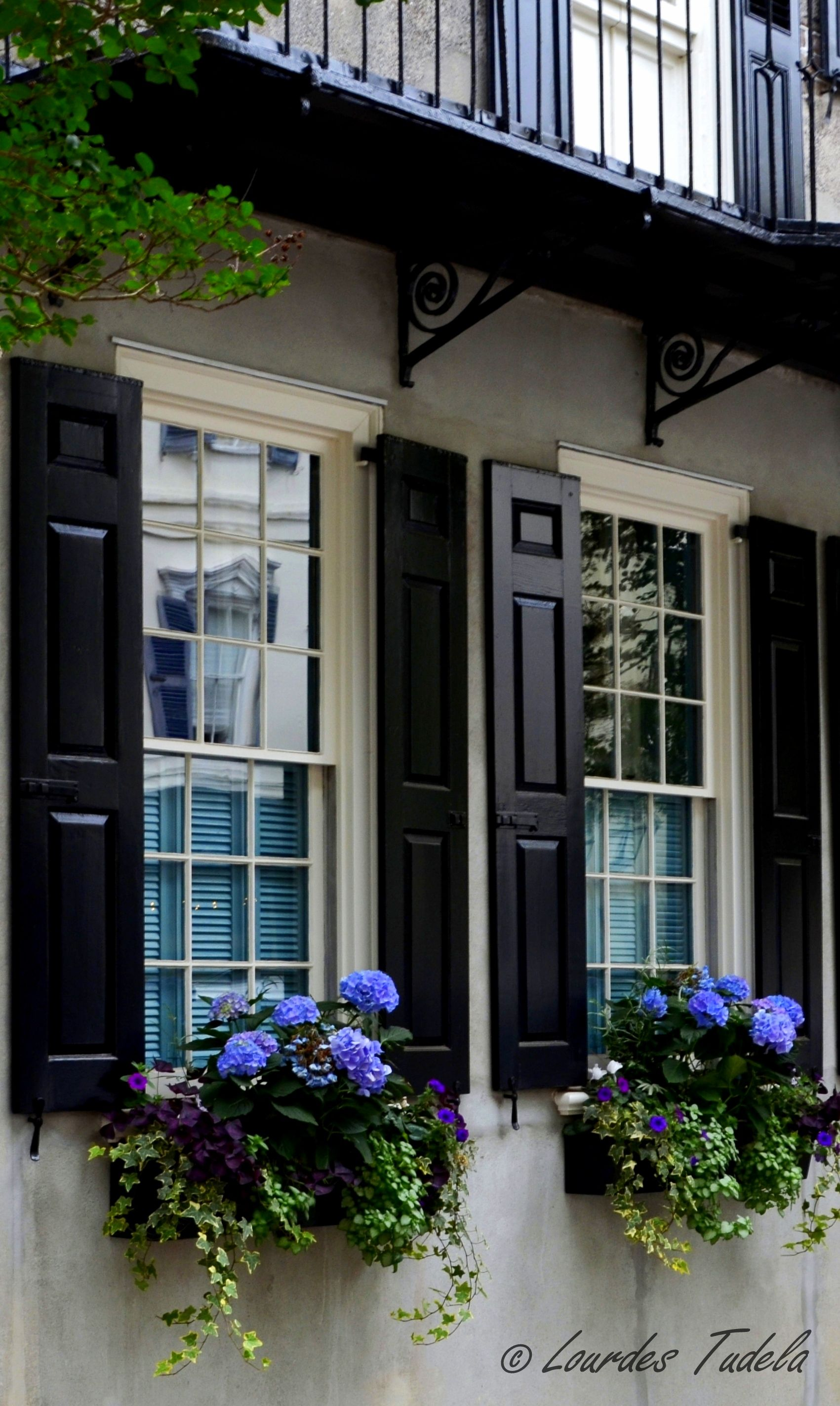 Gorgeous Window Boxes Full Of Hydrangeas, And Good Looking Shutters