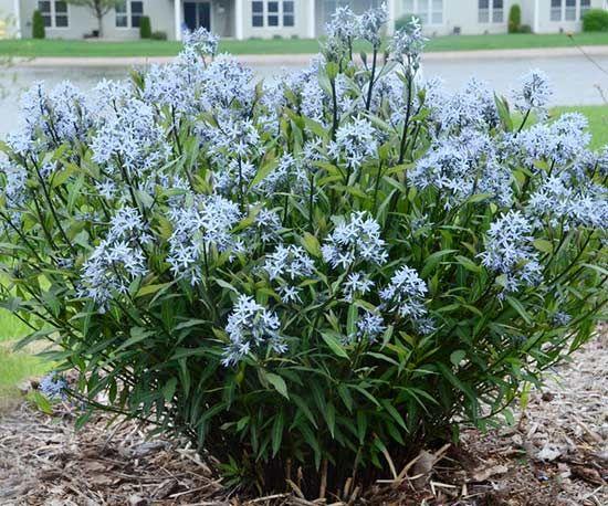Top New Perennials For 2017 Flowers Perennials Perennials