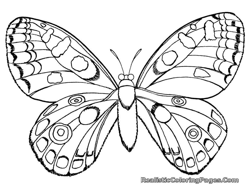Pin De Daria Moukarzel En Fly Mariposas De Colores Dibujos De Mariposas Arte De Piedra [ 768 x 1024 Pixel ]